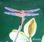 Dragonfly.png (943283 bytes)