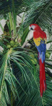 ScarletMacaw.png (1472097 bytes)