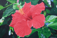hibiscus_2006.png (988518 bytes)