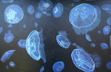 moon jellies 07.png (360378 bytes)