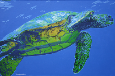 sea_turtle_1_06.png (338629 bytes)