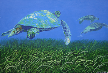 sea_turtle_3_06.png (390557 bytes)